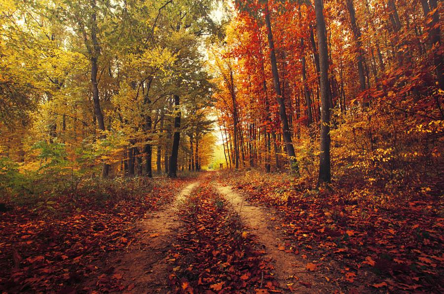 Autumn Walk CXXVI. by Zsolt Zsigmond on 500px.com