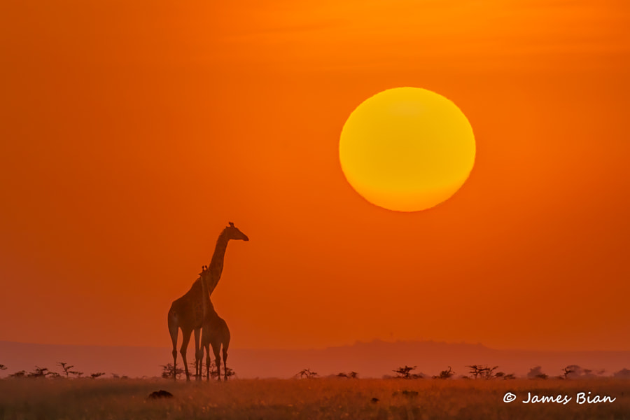 Sunset in Africa by James Bian on 500px.com