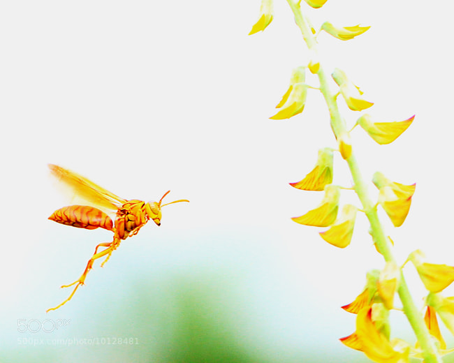 Photograph find the honey by Tuan Hung Nguyen on 500px