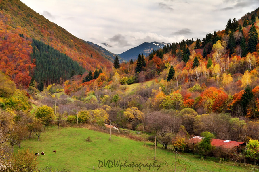 Photograph Bulgarian autumn by Dennis van de Water on 500px