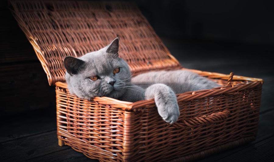 Cat's life .... by Artur Kowalski  on 500px.com
