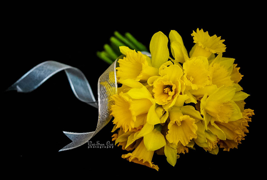 Photograph Daffodils 02 by Wei-San Ooi  on 500px