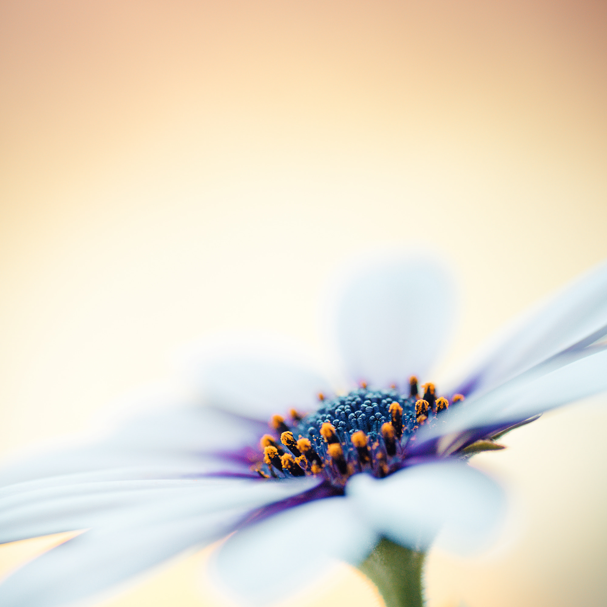 Photograph Bloem by Patrick Stroobach on 500px
