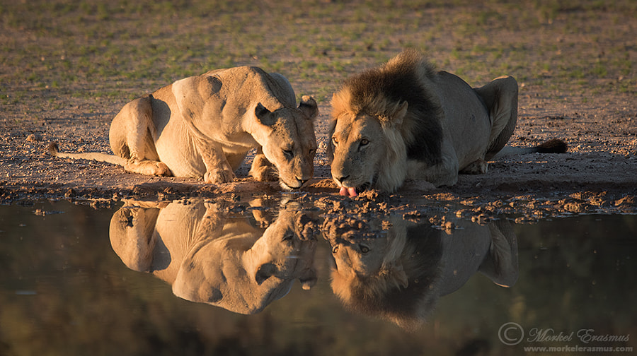 Joined for a Drink by Morkel Erasmus on 500px