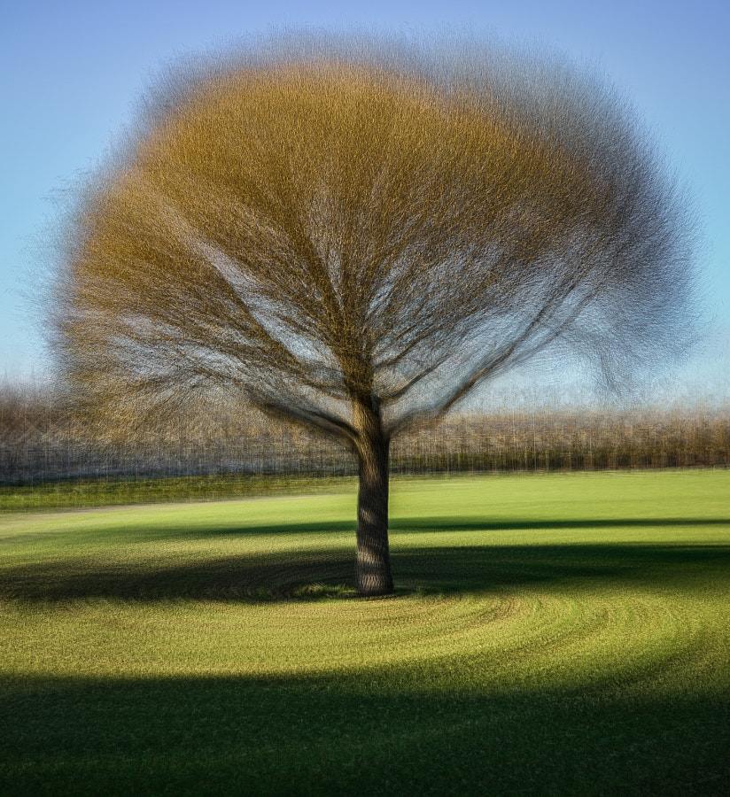 The spinning tree