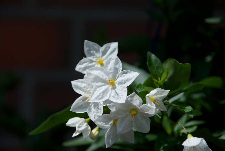 Jasmin by Andreas Löchte on 500px.com