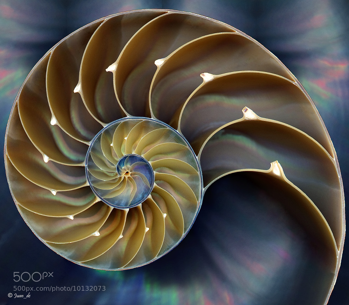 Photograph Nautilus by Juan de Francisco on 500px