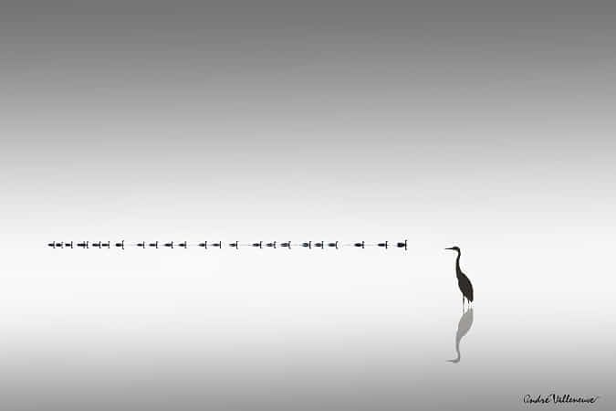 Ducks in line and heron by Andre Villeneuve