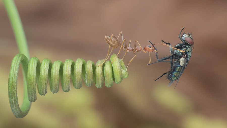 Ant Win.  by Lim Choo How on 500px.com