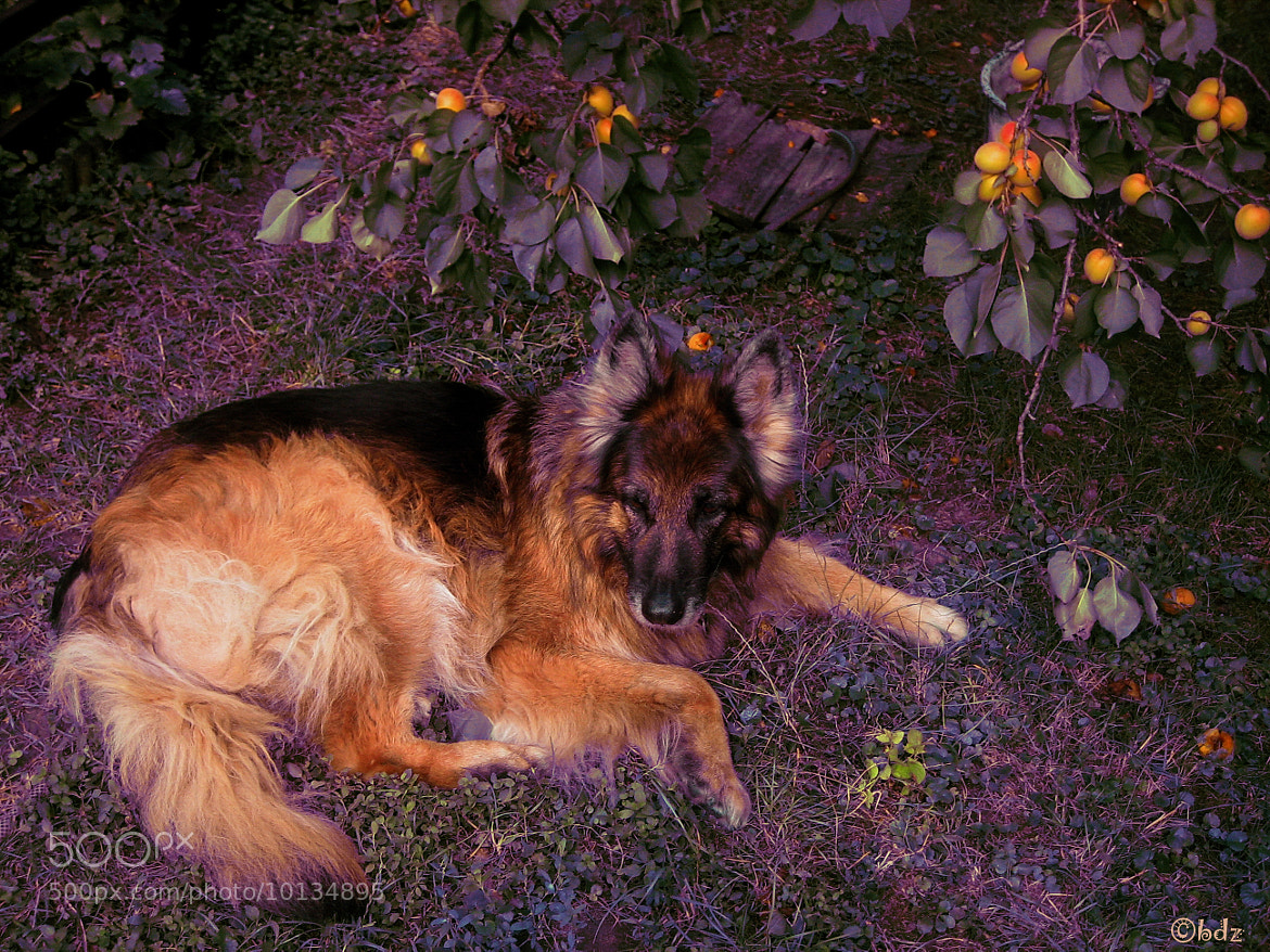 Photograph Luna, the dog which eats apricots... by Betty Ditscheid on 500px