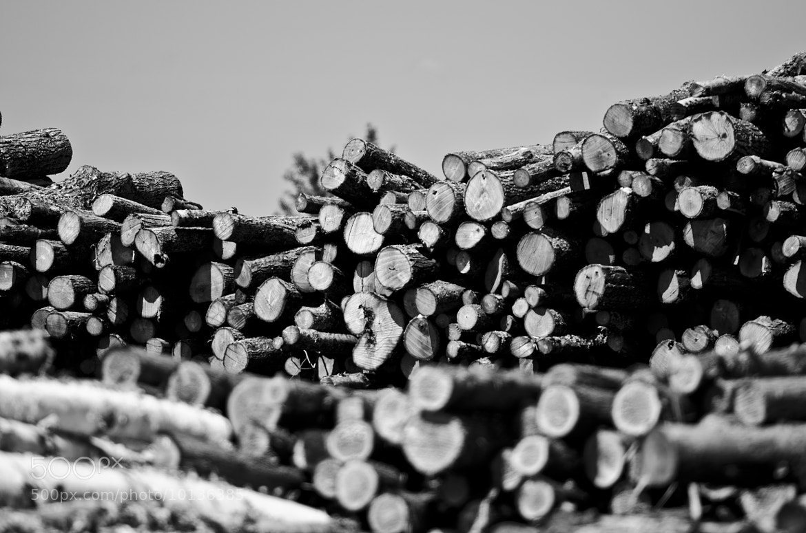 Photograph Wood Work by Andrew Gregg on 500px