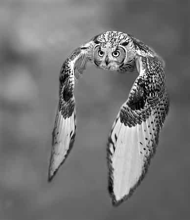 Black and white by Stefano Ronchi