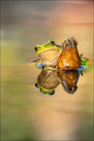 Treefrog by Georg Scharf