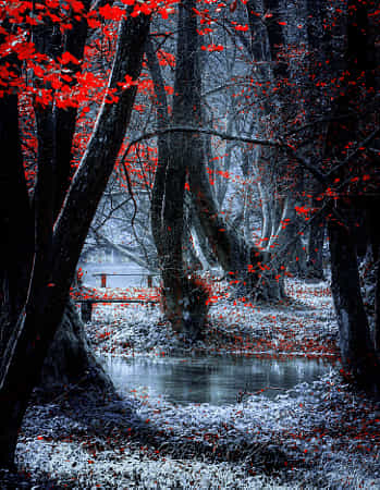 Forest by Mevludin Sejmenovic