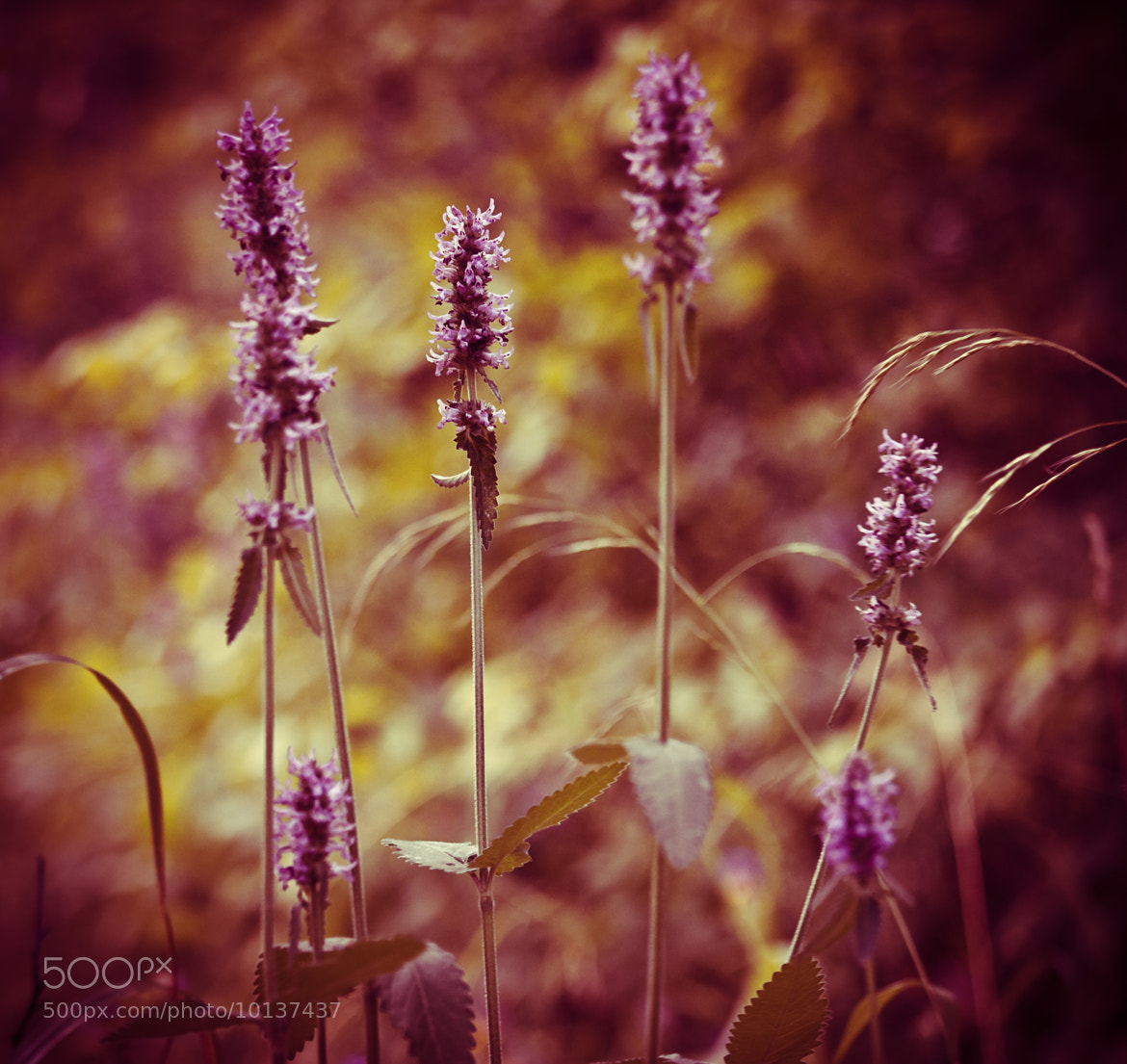 Photograph Purple by Sophia COCONUT_S on 500px