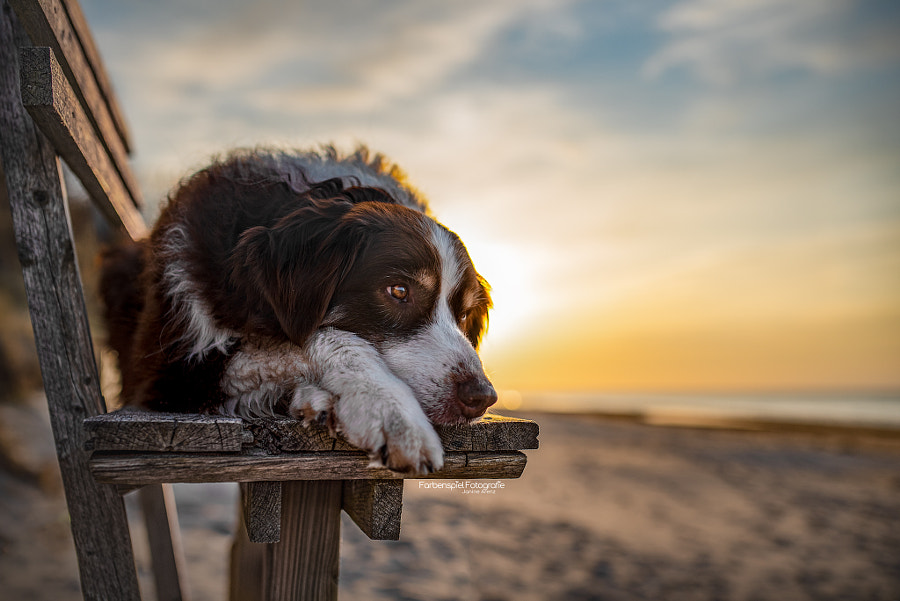 My boy in the sunset by Janine Arenz on 500px.com