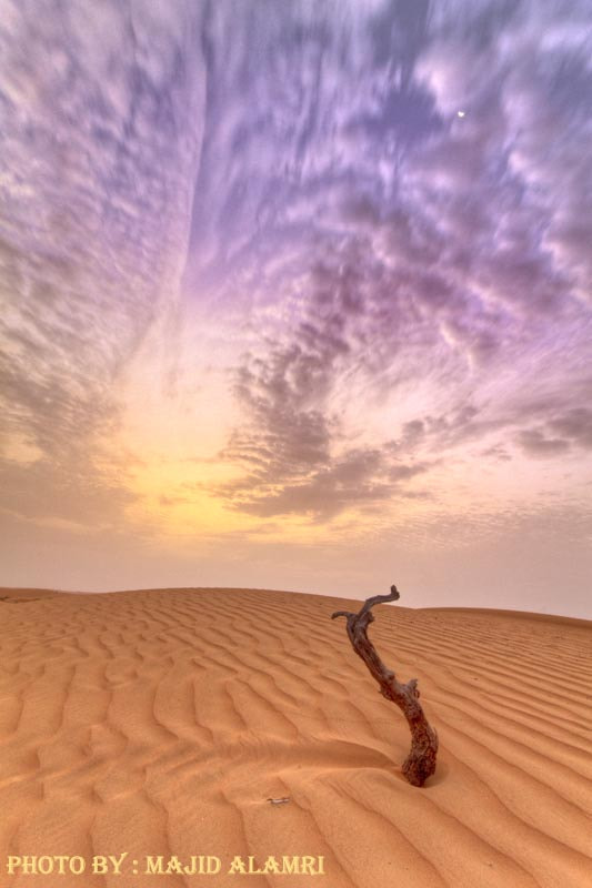 Photograph Alone in the desert1 by majid alamri on 500px