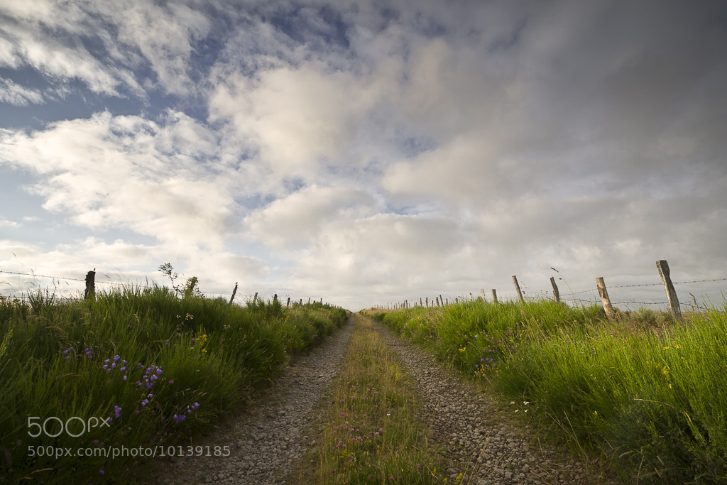 Photograph Le chemin. Entre ombres et lumières. Aubrac by PERRIN Gregory on 500px