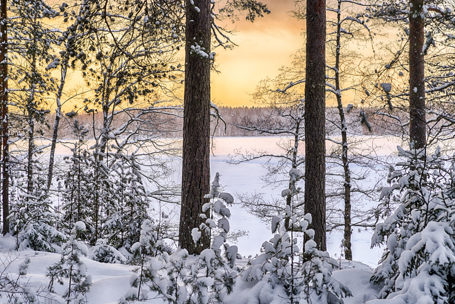 Sunset in the winter forest by Markus Kauppinen on 500px.com