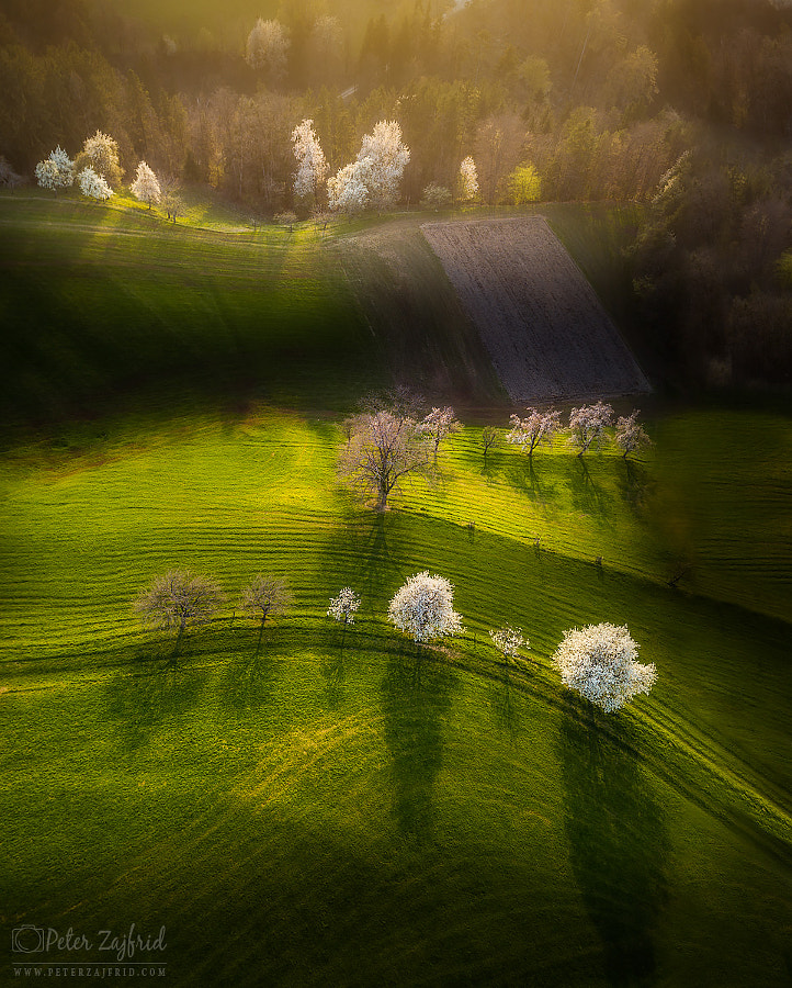 Shining light by Peter Zajfrid on 500px.com