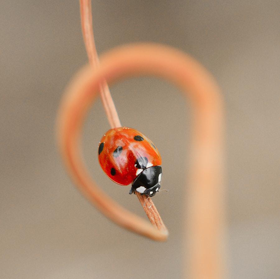 ladybug by yasin mortaş... http://www.biyografya.com/biyografi/4990 on 500px.com