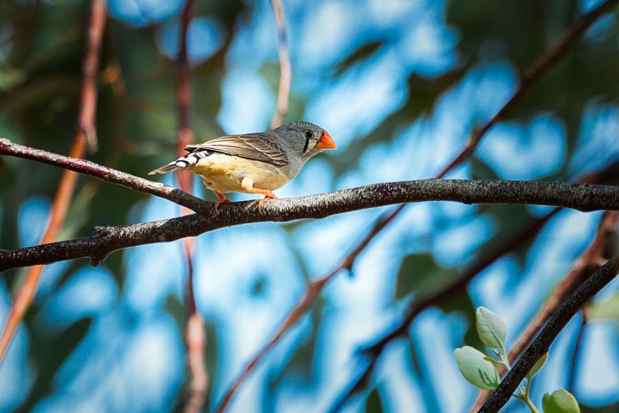 Backyard Birds by Paul Amyes on 500px.com