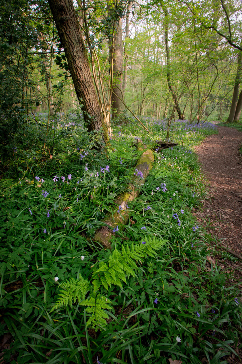 Photograph Swithland Wood by Martin Godfrey on 500px