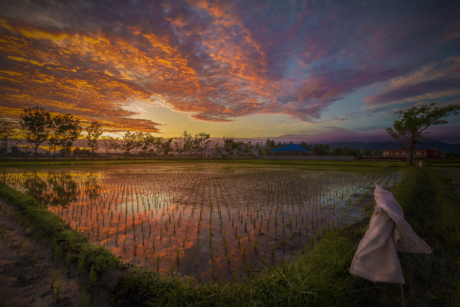 Sawah by Ronald Abbas on 500px.com