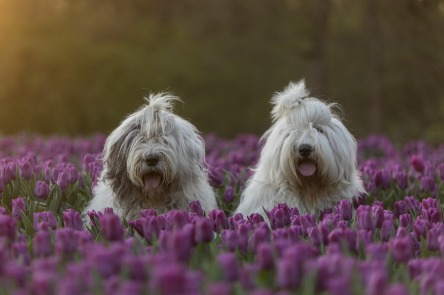 Scarlett and Rose by Cees Bol on 500px.com