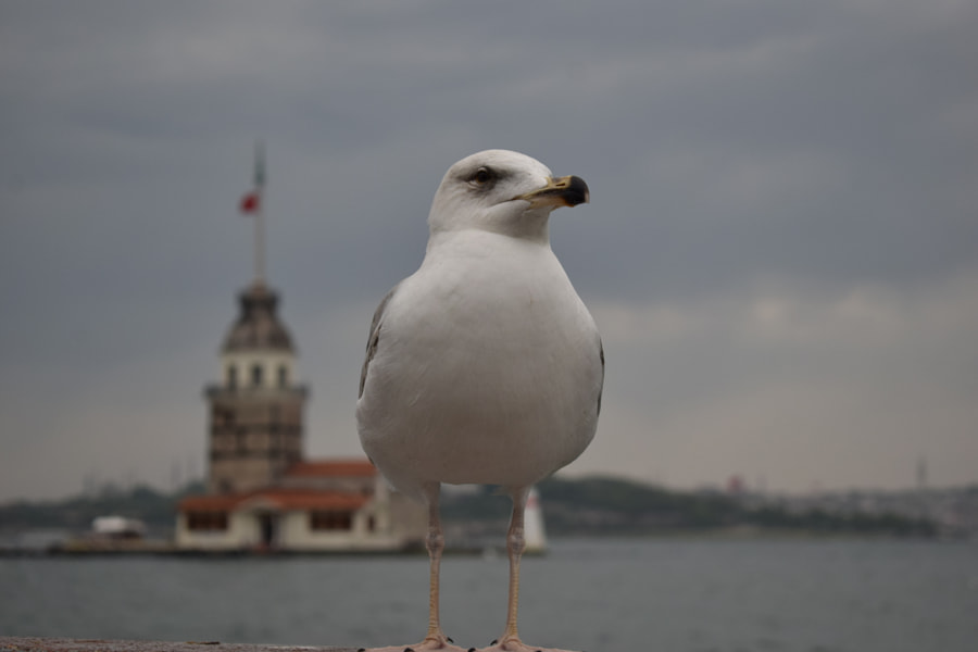 A seagull in a metropol by Ömer Tekin Genç on 500px.com