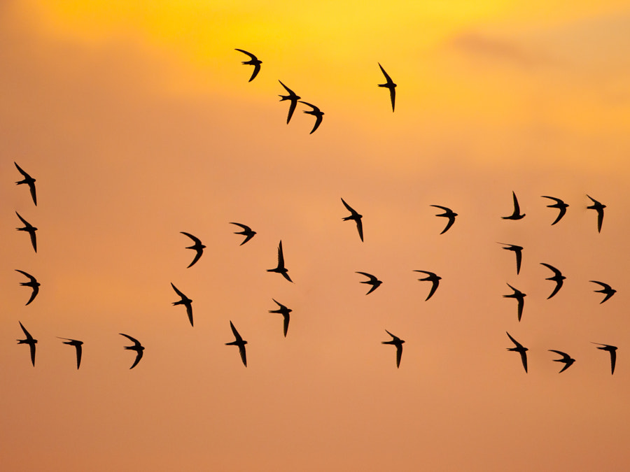 Love Swifts de Ashley Grove en 500px.com