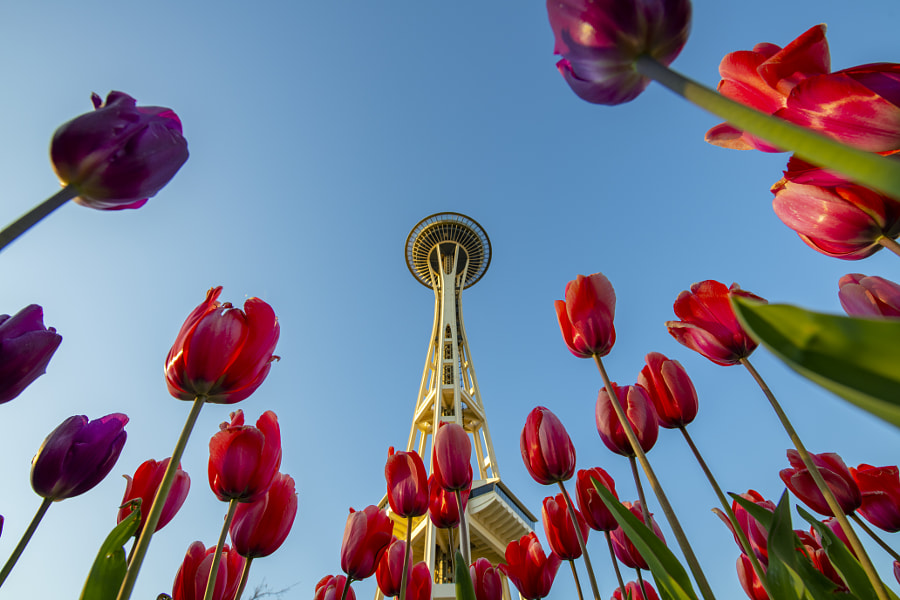 Spring Time at The Space Needle by Torrin  Maynard on 500px.com