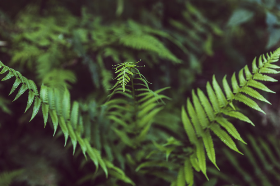 Fern time. by Pablo Reinsch on 500px.com