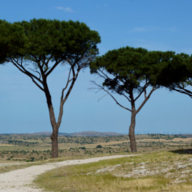 "Another sight from the hill of ""Crown of Apulia""-Andria (Italy) by Antonio Anelli (anthos53)) on 500px.com"