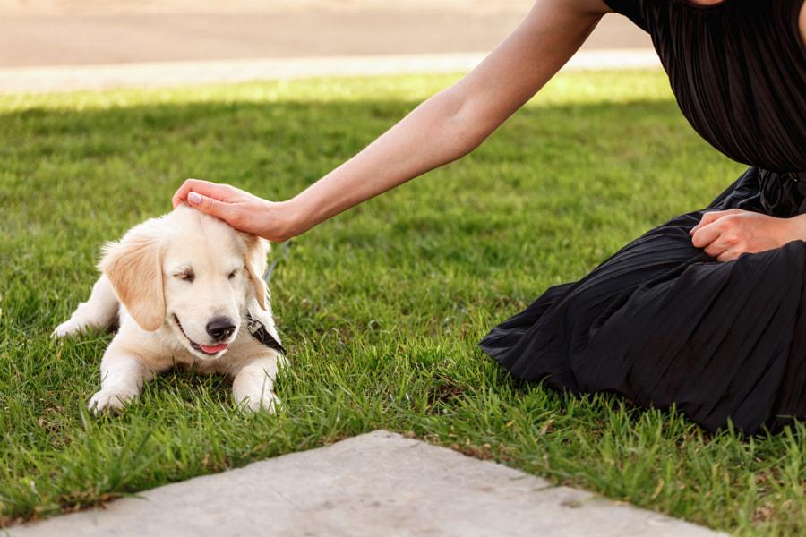 woman stroking a golden retriever puppy in the grass by Denis Ganenko on 500px.com