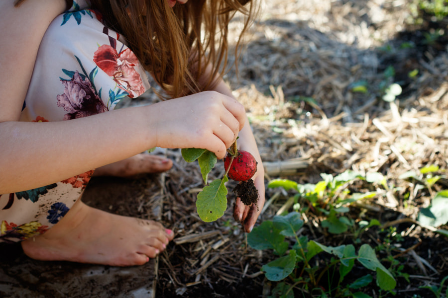 Picking Radishes in the Veggie Patch by Ben Robson on 500px.com