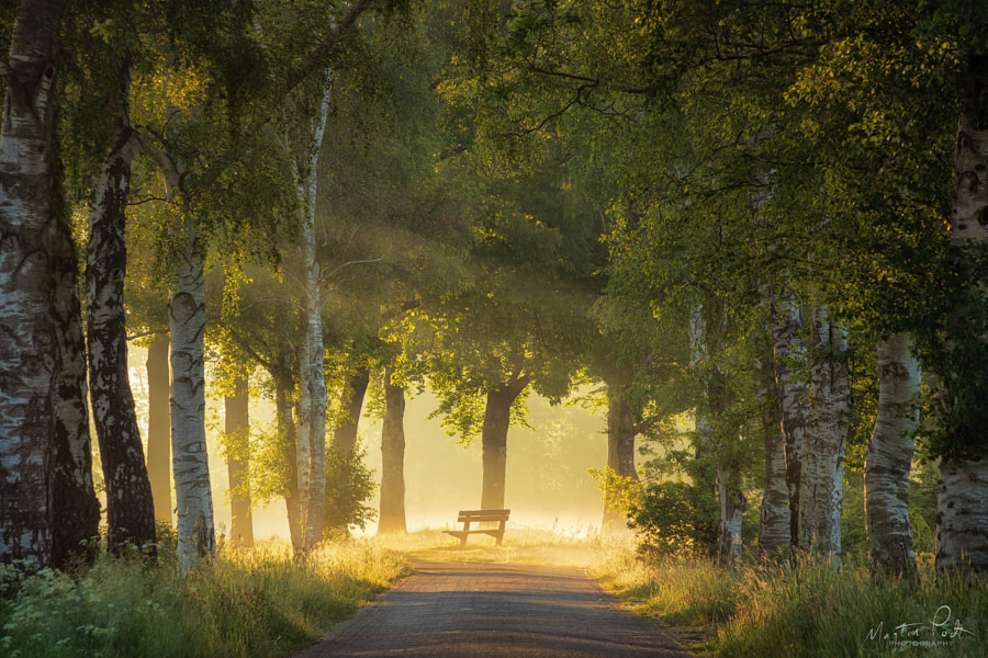 The bench in spring light by Martin Podt on 500px.com