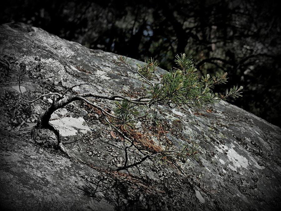Wild bonsai by Yves LE LAYO on 500px.com