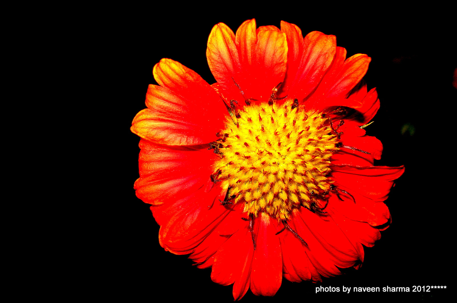 Photograph Wish u best of weekend by naveen sharma on 500px