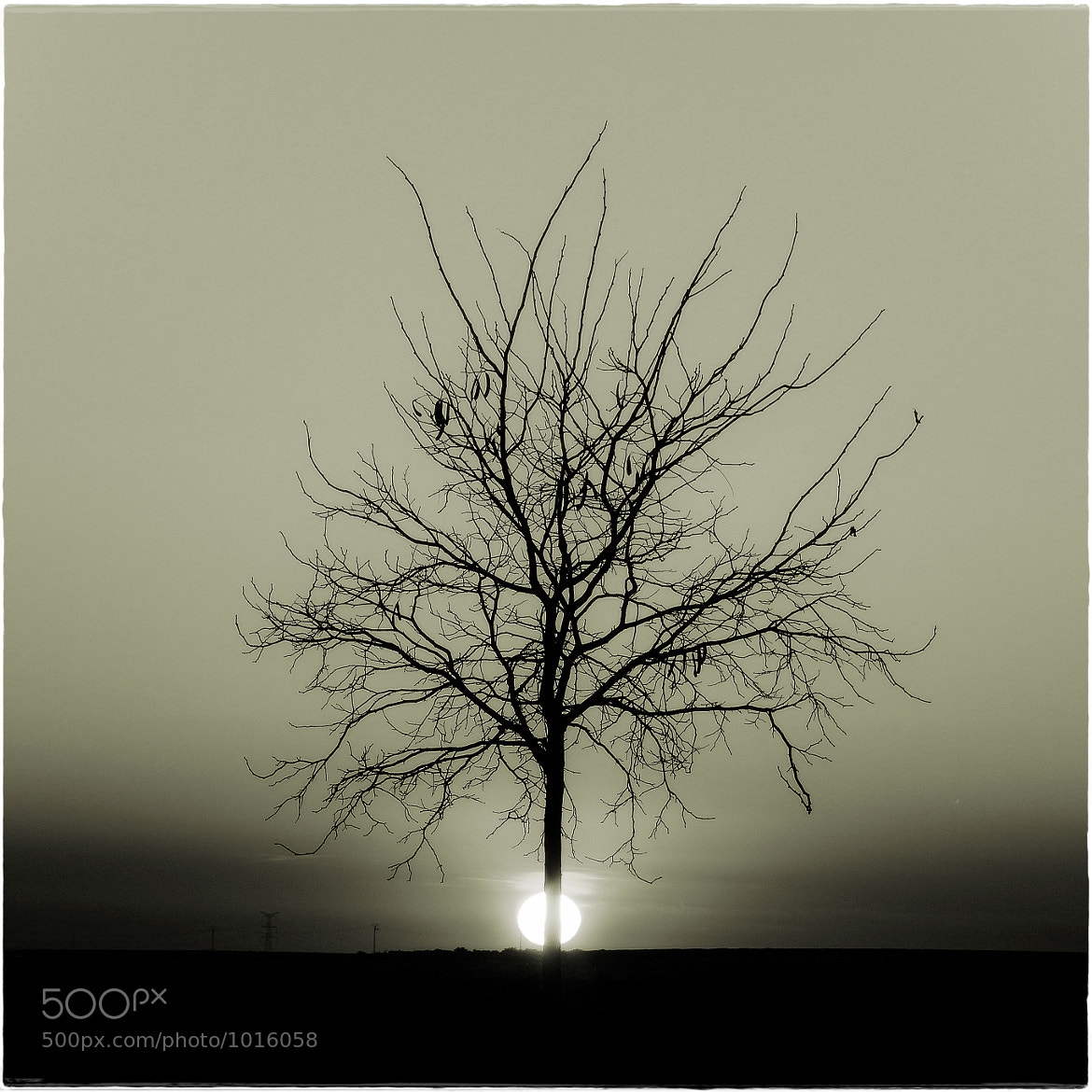 Photograph The Tree by Luis Mariano González on 500px