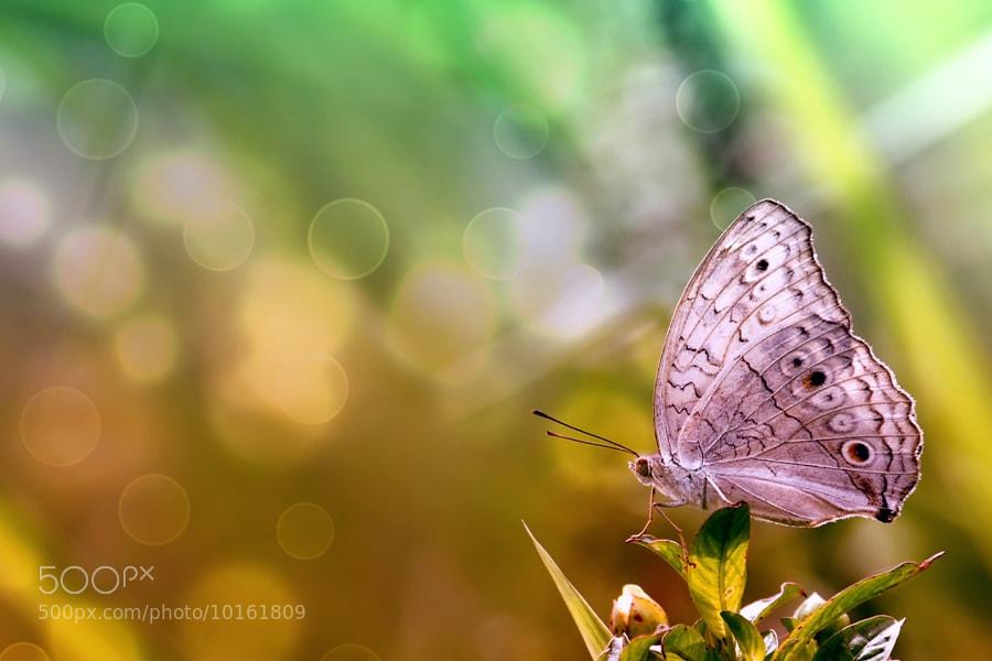 Photograph Waiting by Elfandhino Alie on 500px