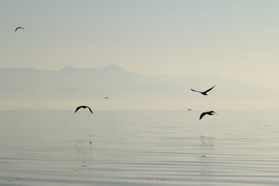 Birds, Skadar Lake, Montenegro by Fred H on 500px.com
