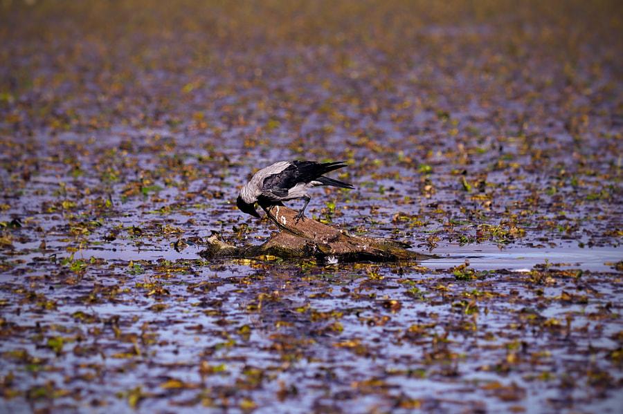 Bird, Skadar Lake, Montenegro by Fred H on 500px.com
