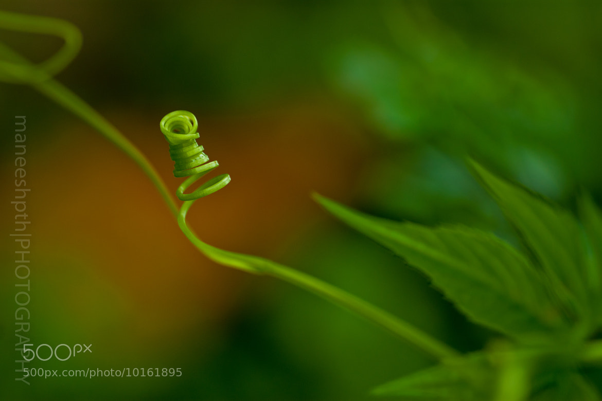Photograph growing twisted( 3 unlikes in the last 5 minutes) by maneesh p on 500px