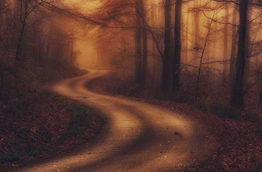 Forest road by Andy58/András Schafer on 500px.com