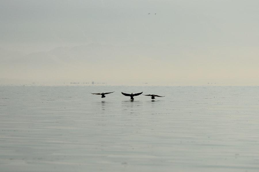 3 birds, Skadar Lake, Montenegro by Fred H on 500px.com