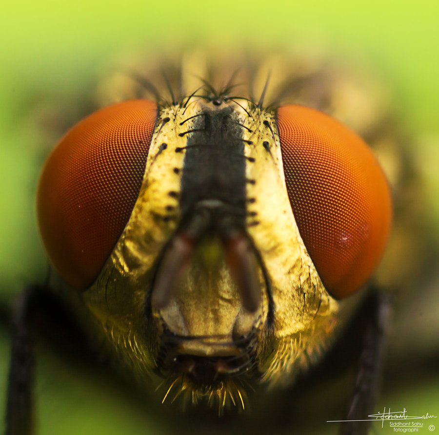 Photograph Compound Eyes by Siddhant  Sahu on 500px