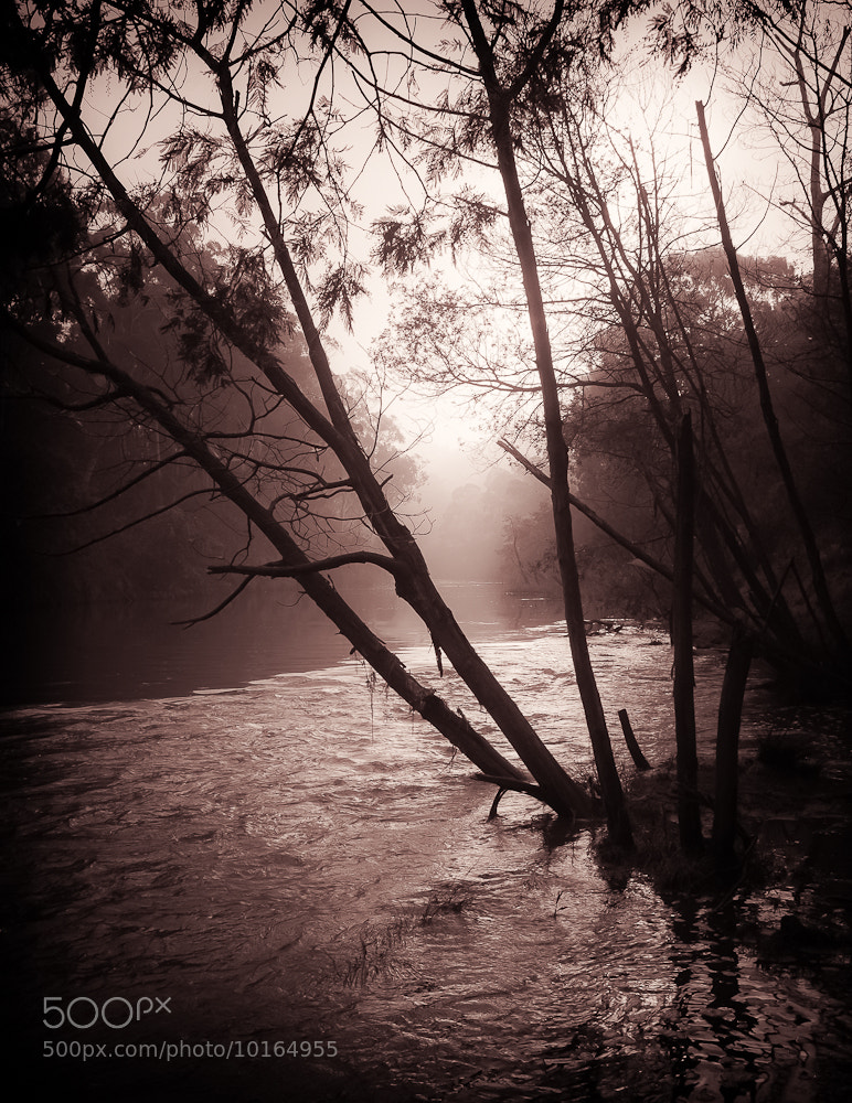 Photograph Fog on the Yarra by Margaret Netherwood on 500px