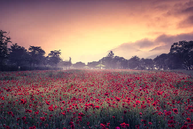Fire on both by Tiger Seo