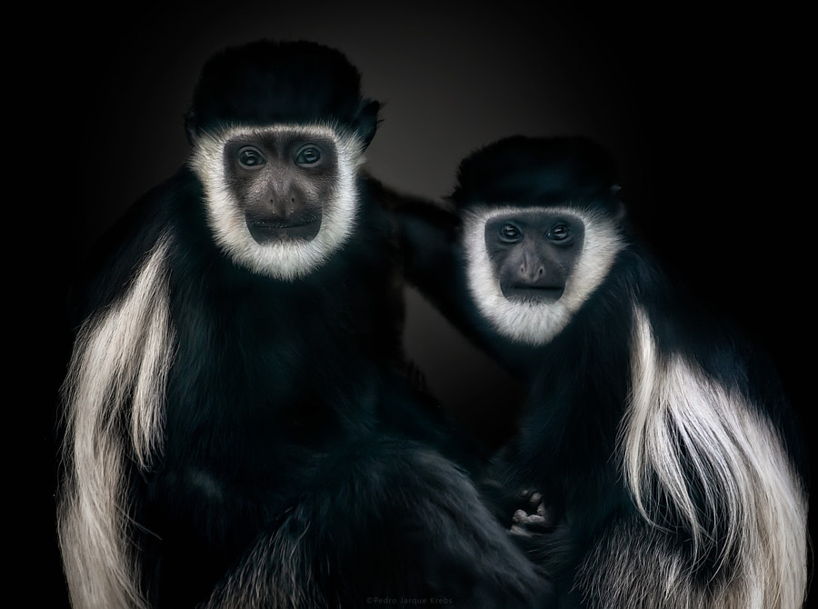Power couple by Pedro Jarque Krebs on 500px.com